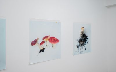 Takashi Homma: 'mushrooms from the forest' Engaging With the Dualities of Nature